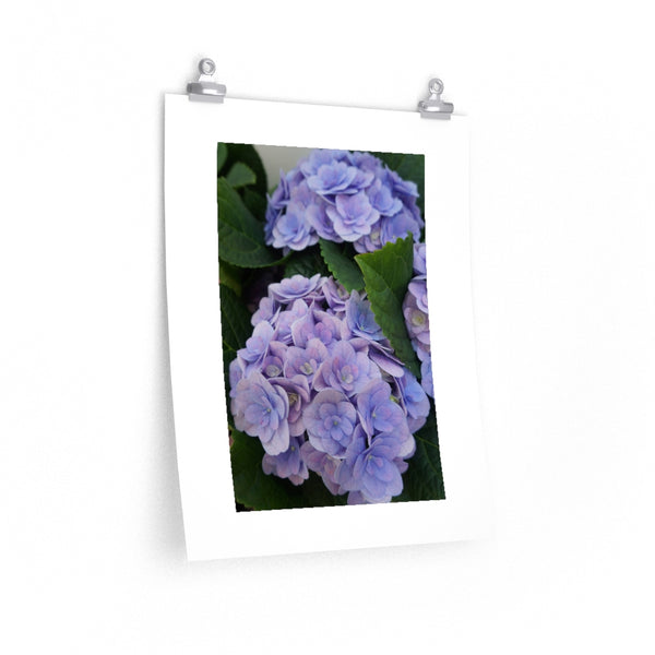 How's Your Hydrangea? Poster