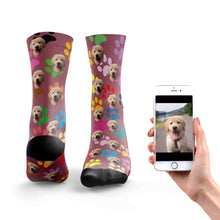 Rainbow Dog Socks
