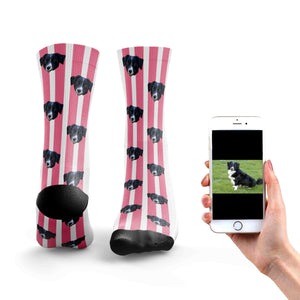 Stripy Dog Socks