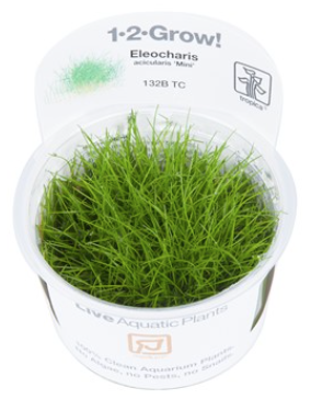 TROPICA 1-2 Grow TC (Eleocharis acicularis 'Mini')