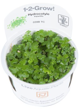 TROPICA 1-2 Grow TC (Hydrocotyle tripartita)