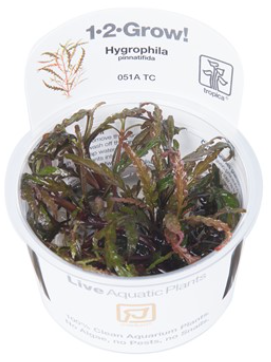 TROPICA 1-2 Grow TC (Hygrophila pinnatifida)