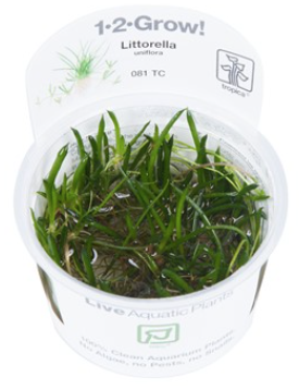 TROPICA 1-2 Grow TC (Littorella uniflora)