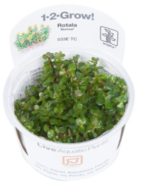 TROPICA 1-2 Grow TC (Rotala 'Bonsai')