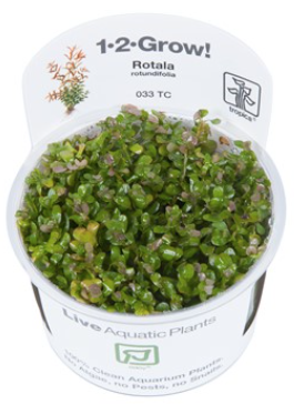 TROPICA 1-2 Grow TC (Rotala rotundifolia)