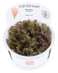 TROPICA 1-2 Grow TC (Rotala wallichii)