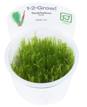 TROPICA 1-2 Grow TC (Taxiphyllum 'Spiky')
