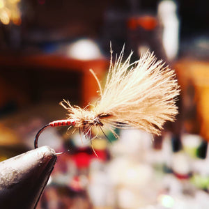 GINGER QUILL CDC EMERGER
