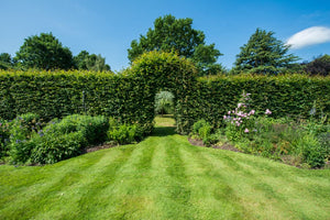 7 Beautiful Garden Hedge Design Ideas