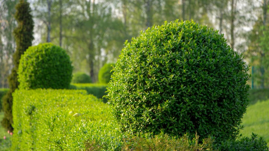 7 Most Popular Styles of Hedges