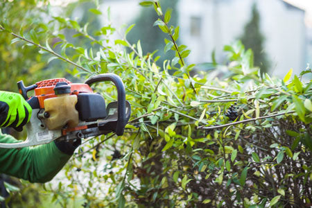 hedge repair service