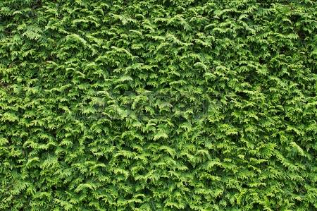 CedarSmith | Professional Hedge Trimming | Free Estimates