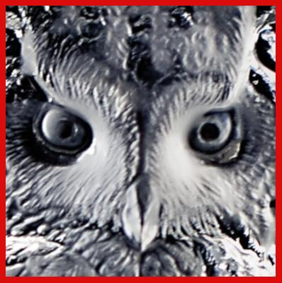 Gifts Actually - Mats Jonasson Crystal - Eagle Owl (33600) - Close-up