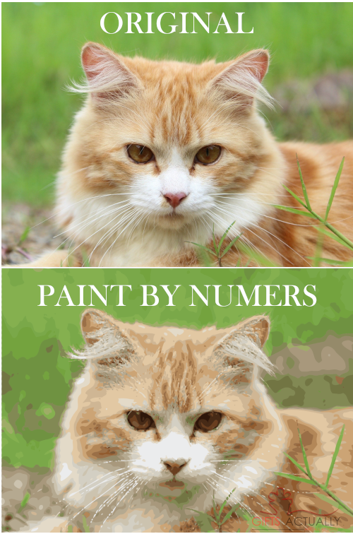 Gifts Actually - Custom / Photo Paint by numbers - Cat