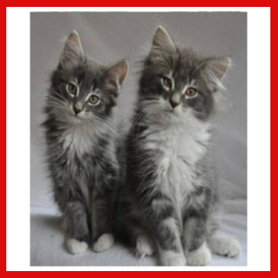 Gifts Actually - Paint By Numbers - (DIY Paint kit) - Two Cats (Grey)