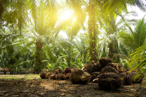 Why Sustainably Sourced Palm Oil Is More Important Than Ever