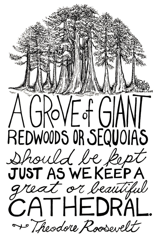 Theodore Roosevelt Quote Inspirational Nature Art With Redwood Trees Original Drawing By Rick Frausto