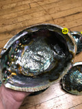 6Witch3 abalone shell #20