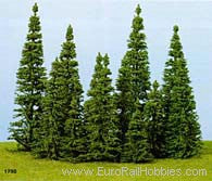 Heki Fir Trees