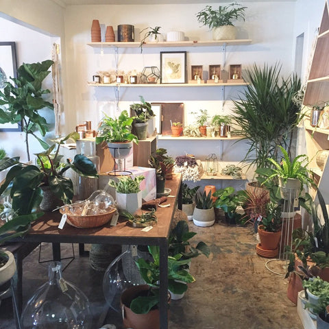 frond plant shop in austin texas makes a fun housewarming gift for couples.