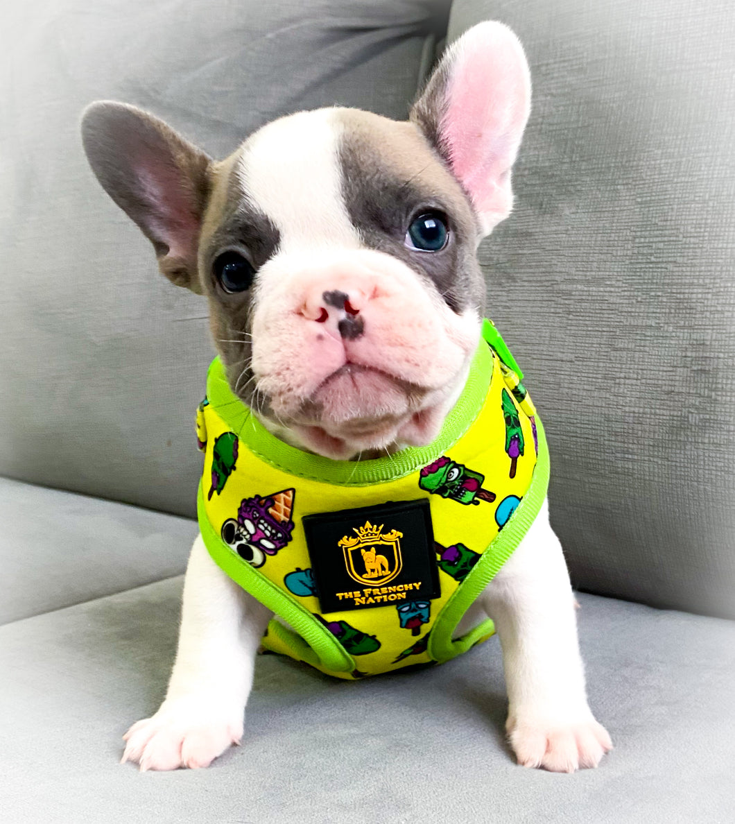 "🔥NEW ARRIVAL 🔥 ""Ice Screammm"" 🍦🧟‍♂️🧟‍♂️Puppy Adjustable Harness"
