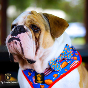 """Finger licking good""  Collar & Bow Tie ✨Bulldog collection ✨"