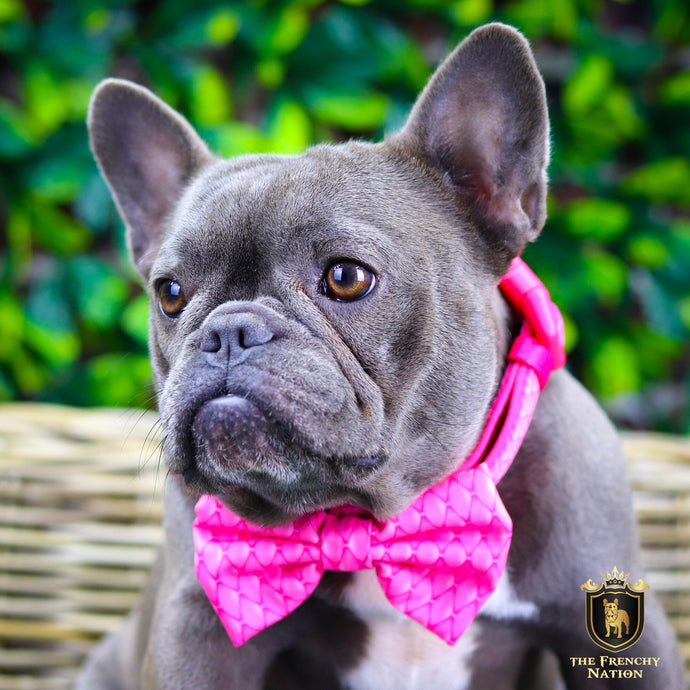 """Fabulous Darling "" Collar With Bow Tie"