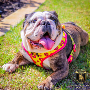 """Donut Life""  Adjustable Harness ✨Bulldog Collection ✨"