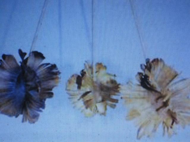 Dried Butterfly Heads - Currently Out of Stock