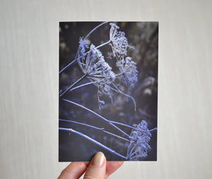 Frosted Flower Greeting Card