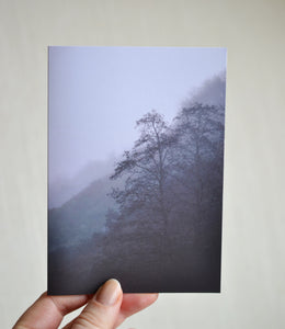 Trees in Mist Greeting Card