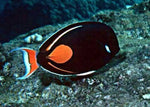 Achilles Tang large