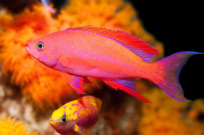 Randall Anthias