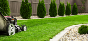 Common Lawn Problems and How to Fix Them