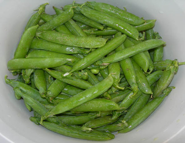 BIG PAK: Snap Peas: Sugar Daddy #124