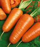 Carrots: Royal Chantenay #232