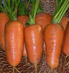 Carrots: Chantenay Red Cored #162