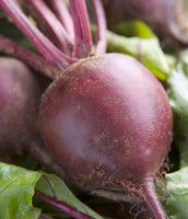 Beets: Early Wonder #22