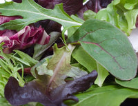 Gourmet Mesclun Salad Mix #632