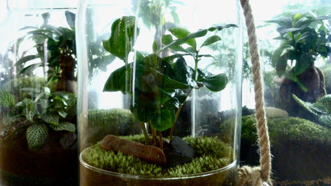 terrarium la green touch