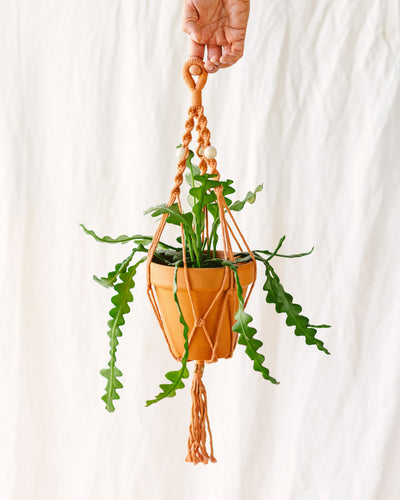 Suspension macramé plante Terracota