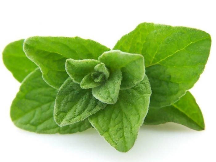 Oregano (1oz)