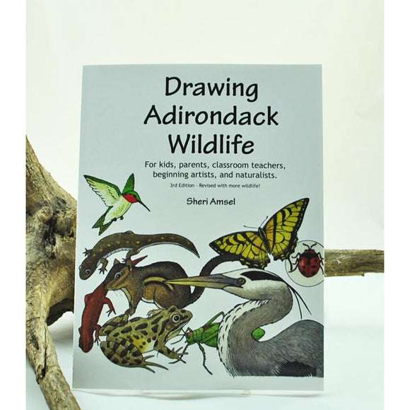 Drawing Adirondack Wildlife