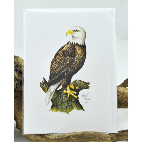 Bald Eagle Single Note Card