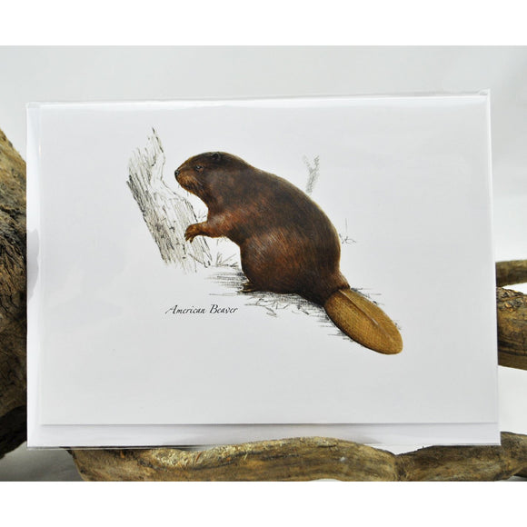 American Beaver Single Note Card