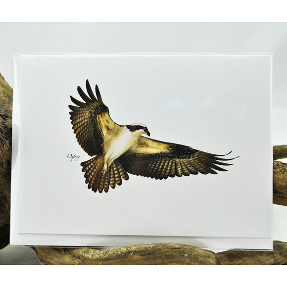 Osprey Single Note Card