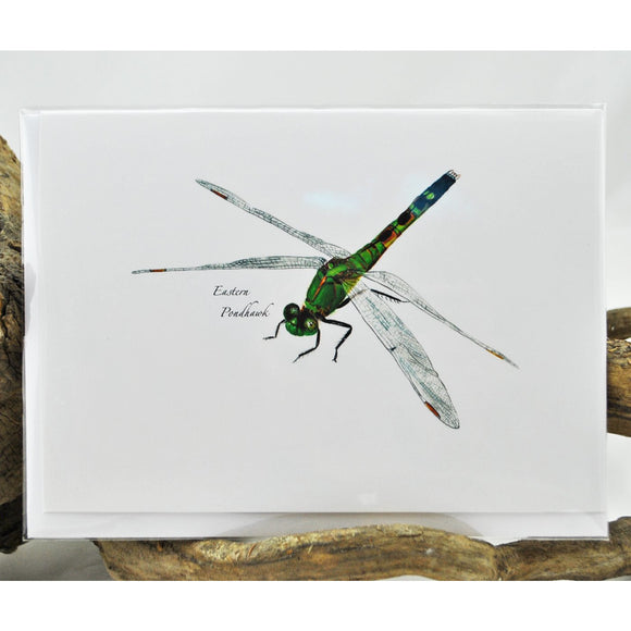 Eastern Pondhawk Single Note Card