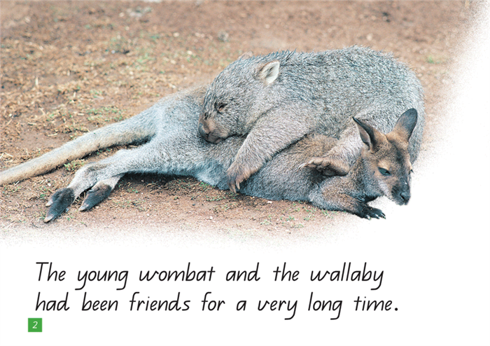 A Steve Parish Kids Story Book Wombat's Friend-Pascal Press-booksrusandmore