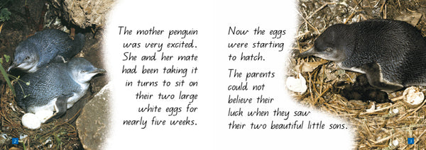 A Steve Parish Kids story Book Little Penquins-Pascal Press-booksrusandmore