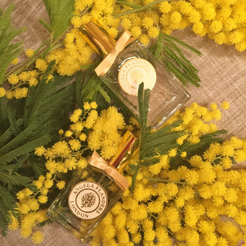 Fragrance Focus: Mimosa